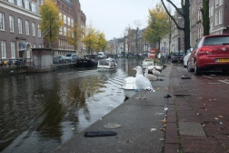 Seagulls enjoy Amsterdam too!